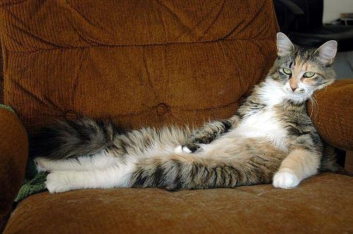 lazy_cat-1kffh7s